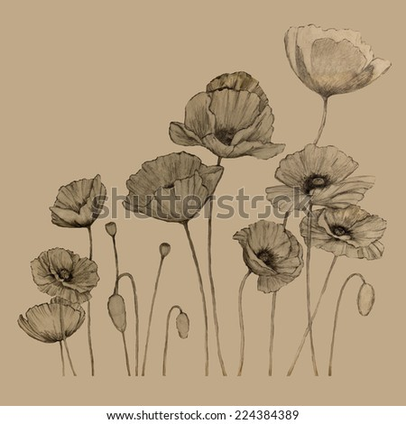 A black pencil drawing of poppies and buds is on a sepia colored background.