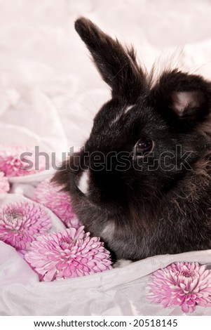 A black rabbit surrounded by pink flowers on white silk