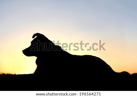 a black silhouette of a German Shepherd, Border Collie mix breed dog is laying down in front of a sunset in the sky.  Room for Copyspace. - stock photo