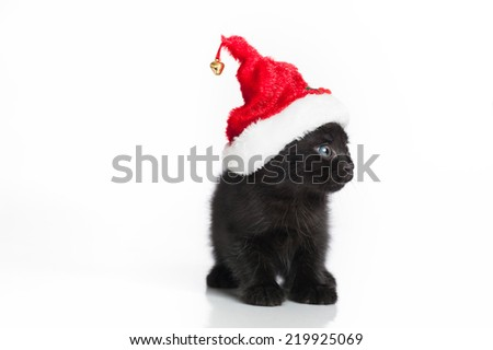 A black Tabby kitten (looking a little scared or surprised), wearing a red and white Santa hat. Shot in the studio on an isolated, white background.