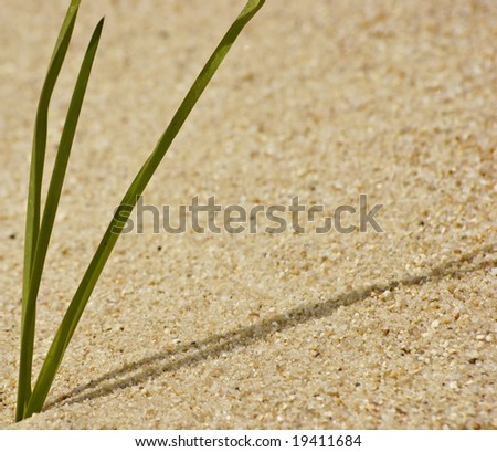 A blade of grass on a dune