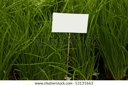 A blank sign on a wooden stick surrounded by green plants - stock photo