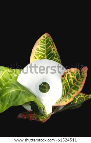 A blank white cd disk resting in the middle of a tropical plant. - stock photo