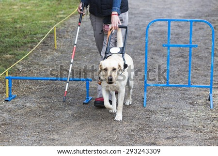 A blind person is led by her golden retriever guide dog during the last training for the dog. The dogs are undergoing various trainings before finally given to the physically disabled people.