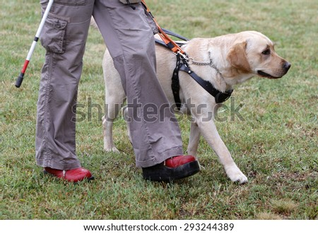 how to become a guide dog for the blind trainer