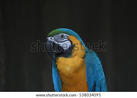 A blue and gold macaw
