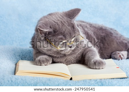 A blue british business cat is wearing glasses reading notebook (book) - stock photo