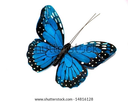 A blue butterfly isolated on white background - stock photo