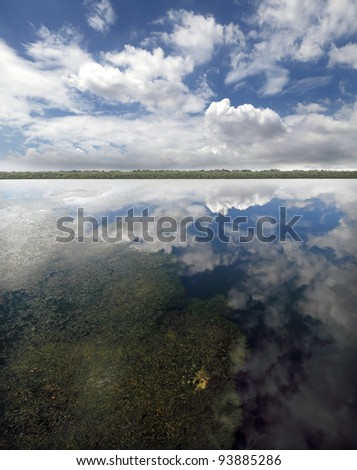 A blue cloudy sky reflected on the surface of a still lagoon with a tropical mangrove forest in the horizon. - stock photo