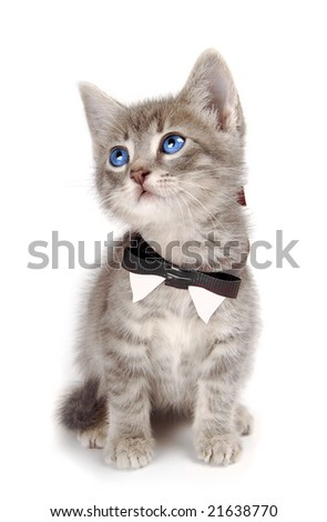 A blue eyed kitten with large ears and a bowtie. - stock photo
