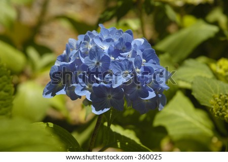 A Blue flower - stock photo