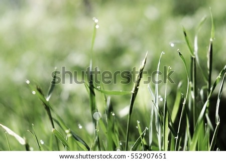 A blurry close up of of healthy grass in Norway