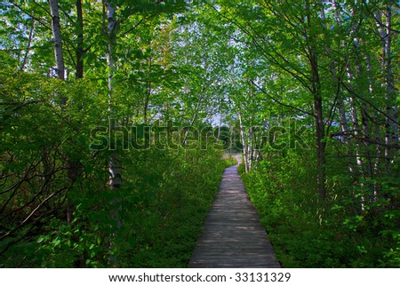 A boardwalk through a grove of trees leads towards a clearing in the afternoon sun.