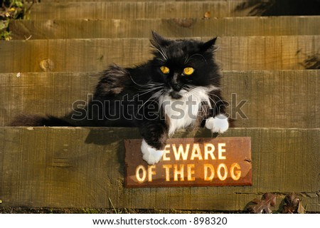 "A bold cat ignores the ""Beware of Dog"" sign. - stock photo"