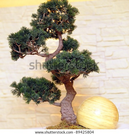 A bonsai tree with decorations-square - stock photo