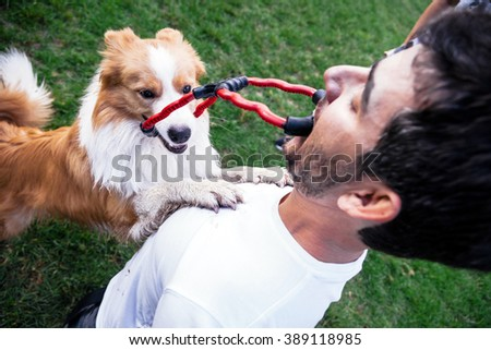 A Border Collie dog playing tug of war with its owner on the park's lawn. - stock photo