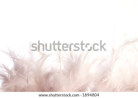 A border made of white feathers on a white background - stock photo