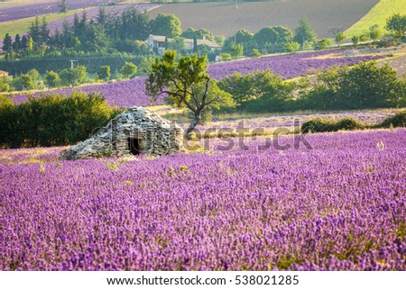"A Borie - dry-stoned ""house"", Sault region, Vaucluse, Provence, France"