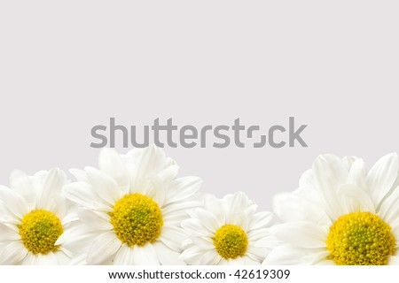 a bottom edge border of vibrant white and yellow daisies