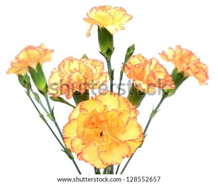 A bouquet gift of carnation flowers