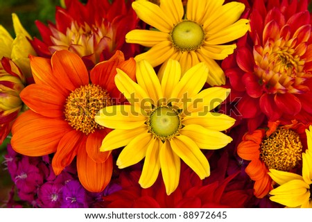 A bouquet of Autumn flowers - stock photo