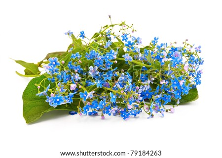A bouquet of blue spring flowers isolated on white background