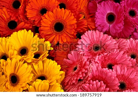 A bouquet of gerberas. Floral background. Floral pattern. - stock photo