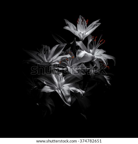 a bouquet of lilies on a black background - stock photo