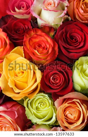 A bouquet of multi-coloured roses. Focus on middle roses. - stock photo
