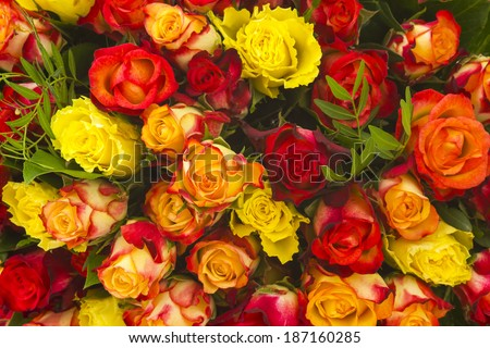 A bouquet of multicolored roses - stock photo