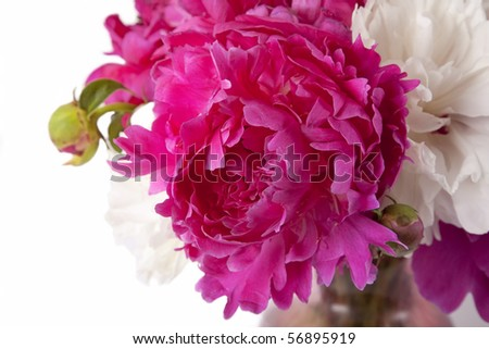 A bouquet of peonies in a glass vase. - stock photo