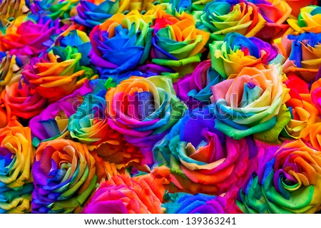 A bouquet of rainbow roses. Floral pattern. - stock photo