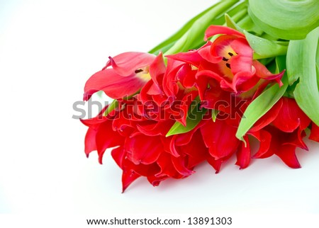 A bouquet of red tulip over white.