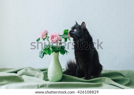 A bouquet of roses and a cat