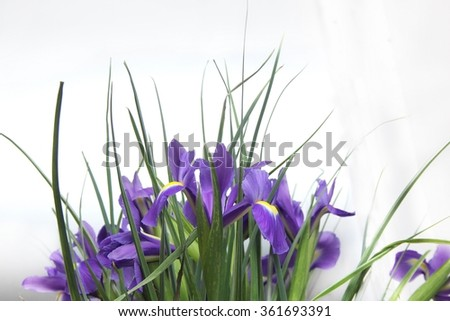 a bouquet of small purple irises