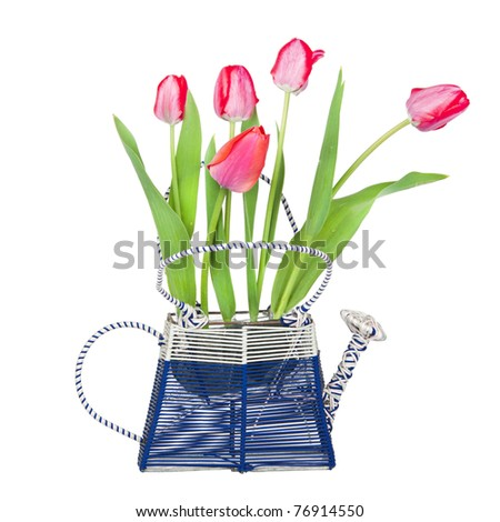 A bouquet of tulips in a vase, the vase in the form of watering, isolated on a white background - stock photo