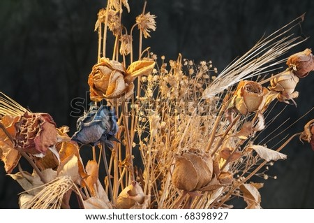 A bouquet of withered roses and flowers on dark background - stock photo
