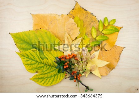 A bouquet of yellow, green autumn leaves, berries and seeds. - stock photo