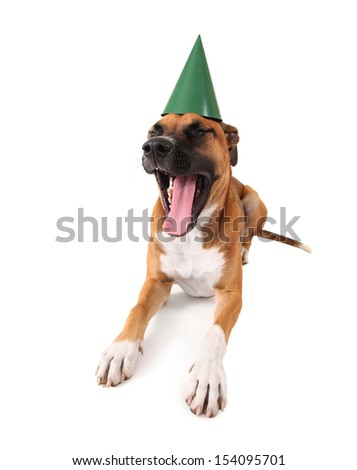 a boxer pit bull mix with a birthday hat on - stock photo