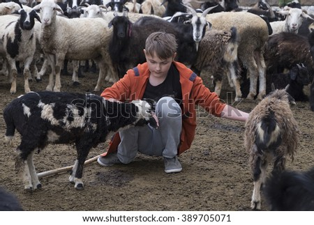 a boy and a goat on a farm - stock photo