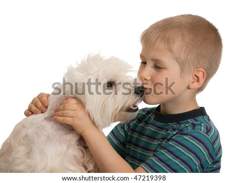 A boy is kissing his west highland white terrier; isolated on the white background