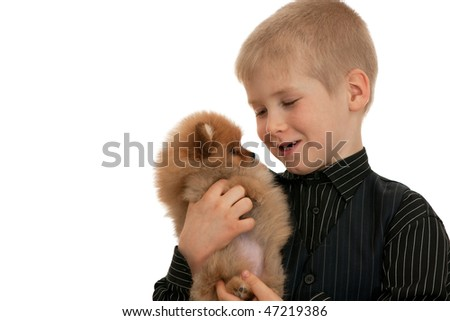 A boy is petting his favorite pomeranian spitz; isolated on the white background