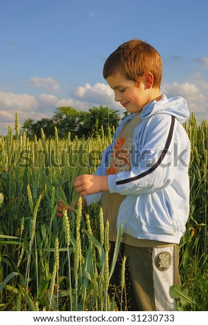 A boy standing in a field at sunset, holding wheat in a hand and looking at it.