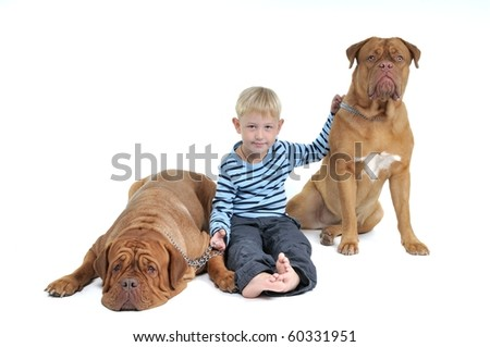 A boy with his Pet Friends - huge dogs isolated on white background - stock photo