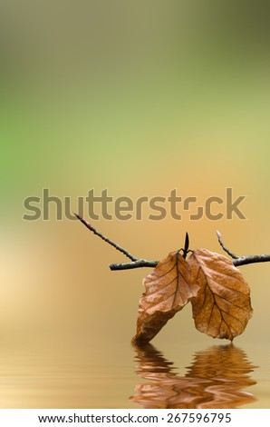 A branch hanging over rippling water, with Autumn leaves touching and reflecting in the surface. - stock photo