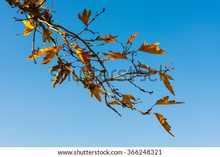 A branch of autumn leaves against the blue sky - stock photo