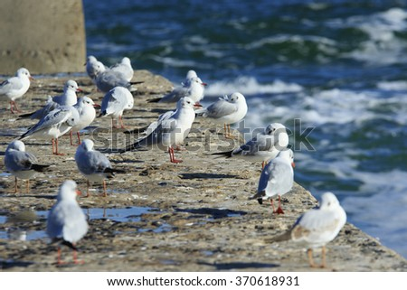 a branch of gulls rest on a pier at the sea - stock photo