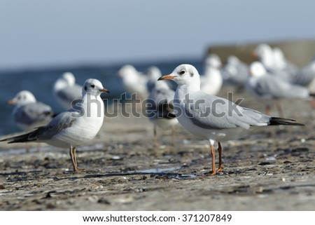 a branch of seagulls stand on a pier in the sea and bask in a sun - stock photo