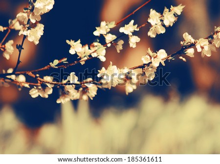 a branch with a flower on a soft background (with a shallow depth of field) done with a retro vintage instagram filter  - stock photo