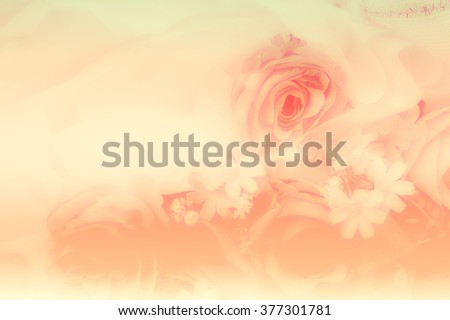 A breathtaking flower displays all its beauty as the sunlight gently strikes its petals. Beautiful for wedding invitations, gardening magazines, advertisements, and many other great ideas and concepts - stock photo
